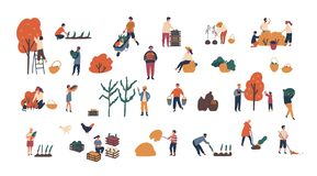 Menigte van uiterst kleine mensen die gewassen of seizoengebonden oogstbundel van mannen en vrouwen verzamelen die rijpe vruchten stock illustratie