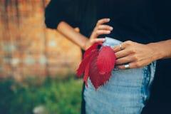 Menina à moda do moderno com a folha vermelha que levanta na rua, momento atmosférico Mulher fresca elegante nas calças de brim d imagem de stock