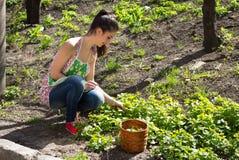 A menina é contratada na remoção de ervas daninhas da grama Fotos de Stock