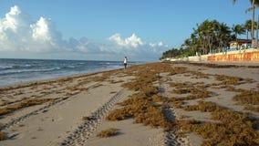 A menina é movimentando-se e de passeio na praia na manhã video estoque