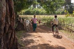 A menina é vacas de uma corda do campo Foto de Stock Royalty Free