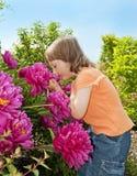 Menina 3 anos de cheiro velho às flores Imagens de Stock Royalty Free