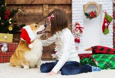 A menina abraça delicadamente um cão fotos de stock