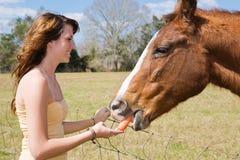 A menina adolescente alimenta o cavalo Foto de Stock Royalty Free