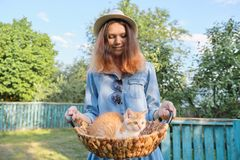 Menina adolescente bonita com o gatinho vermelho pequeno na cesta imagem de stock royalty free