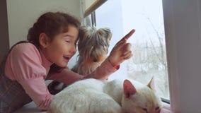 A menina adolescente e os animais de estimação gato e cão que olham para fora a janela, pet os sonos do gato video estoque