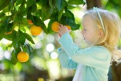 A menina adorável que escolhe laranjas maduras frescas na árvore alaranjada ensolarada jardina Foto de Stock