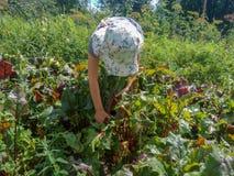 A menina ajuda a colher no jardim foto de stock