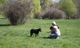 A menina alimenta o cão preto fotografia de stock royalty free