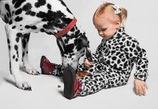 A menina alimenta o Dalmatian Foto de Stock Royalty Free