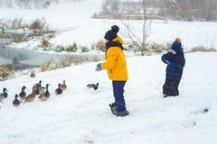 A menina alimenta os patos com fome em um lago congelado imagens de stock royalty free
