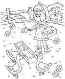 A menina alimenta patos Imagens de Stock Royalty Free