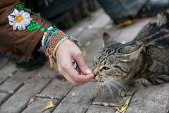 A menina alimenta um gato disperso Imagens de Stock Royalty Free
