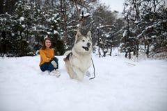 A menina anda em uma floresta nevado com um Malamute do Alasca do cão imagem de stock