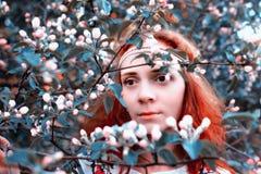A menina anda na primavera através da aleia da maçã imagens de stock