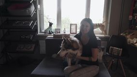 Menina bonita com o cão de puxar trenós no sofá vídeos de arquivo