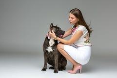 Menina bonita com o terrier cinzento do stafford Imagem de Stock Royalty Free