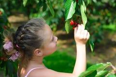 A menina bonita escolhe uma cereja de uma árvore no jardim da cereja Fotografia de Stock