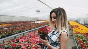 A menina bonita feliz anda e escolhe flores na estufa 4K video estoque