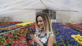 A menina bonita feliz cheira e escolhe flores na estufa 4K vídeos de arquivo