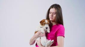 A menina bonita feliz em um t-shirt cor-de-rosa abraça um cachorrinho Jack Russell Terrier, olha na câmera, fundo cinzento, fim filme