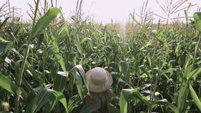 Menina bonita no chapéu que corre e que sorri no movimento lento de campo de milho filme