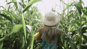 Menina bonita no chapéu que corre e que sorri no movimento lento de campo de milho video estoque