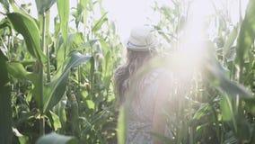 Menina bonita no chapéu que corre e que sorri no movimento lento de campo de milho vídeos de arquivo