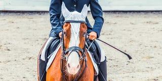 Menina bonita no uniforme e no cavalo do adestramento da baía com olhos azuis na competição do showjumping Fotografia de Stock