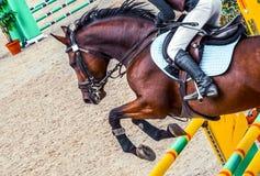 Menina bonita no uniforme e no cavalo do adestramento da baía na competição do showjumping Fotos de Stock
