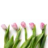 Menina bonita no vestido azul com as tulipas das flores nas mãos em um fundo claro Imagens de Stock Royalty Free