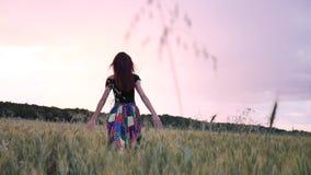 Menina bonita no vestido que anda no campo direto que toca nas orelhas do trigo no por do sol video estoque