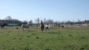 Menina bonita nova que corre com seu cavalo 60fps 4K vídeos de arquivo