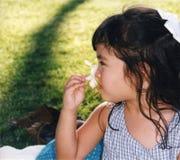 Menina bonita que cheira uma flor - colhida Fotos de Stock Royalty Free
