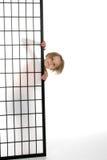 Menina bonita que espreita para fora atrás de uma tela Foto de Stock Royalty Free