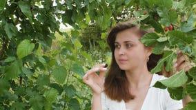 Menina bonita que pegara e que come as amoreiras maduras, uma caminhada no jardim de árvores de fruto, um petisco saudável na nat video estoque
