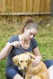 Menina bonita que penteia a pele do cão exterior Foto de Stock