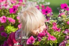 A menina bonito cheira flores Fotografia de Stock Royalty Free