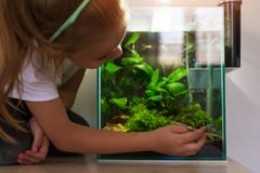 Menina bonito que olha peixes no aqu?rio nano foto de stock