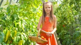 A menina bonito recolhe pepinos e tomates da colheita na estufa video estoque