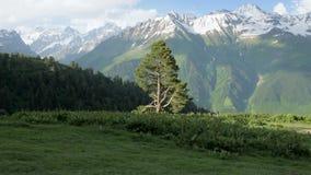 A menina caminha nas montanhas pela árvore alta - área dos lagos Koruldi, Mestia, Geórgia filme