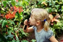 a menina caucasiano branca adorável bonito que olha plantas floresce a begônia através da lupa Fotos de Stock