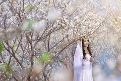 Menina chinesa bonita na ameixa Imagens de Stock