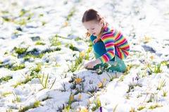 A menina com açafrão floresce sob a neve na mola Fotos de Stock