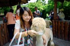 Menina com alpaca Imagens de Stock Royalty Free