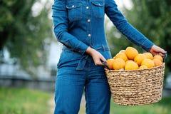 Menina com as laranjas no pomar alaranjado Irmãs bonitas com a laranja orgânica no jardim Conceito da colheita Jardim, adolescent fotografia de stock