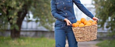 Menina com as laranjas no pomar alaranjado Irmãs bonitas com a laranja orgânica no jardim Conceito da colheita Jardim, adolescent fotos de stock royalty free