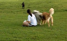 Menina com cães Imagens de Stock Royalty Free