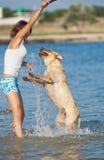 Menina com cães Fotos de Stock