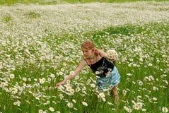 A menina com camomiles Fotos de Stock Royalty Free
